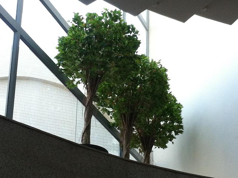 פרוייקטים, עבודות שביצענו, דוגמאות והשראה, tree4ever